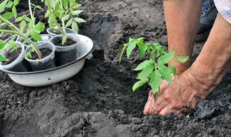 tuinman van hoveniersbedrijf purmerend